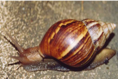 A Full Outlook Structure of a Snail